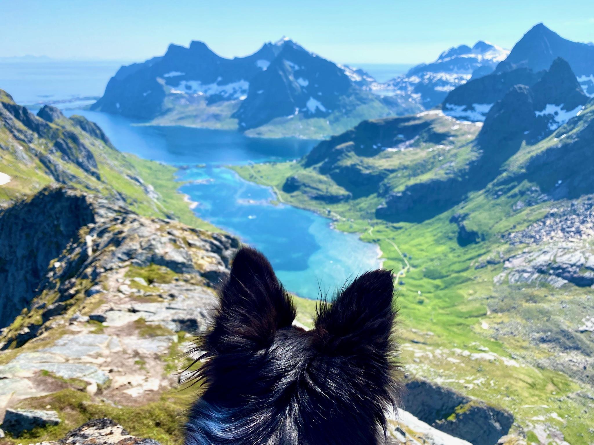 Z psem na Lofotach